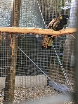 Bird Sanctuary
